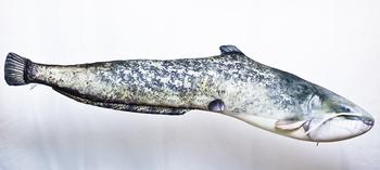 Foto - SÄGA, 115 cm