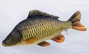 Foto - CUSHION, COMMON CARP, 160 cm